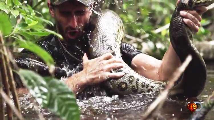 Una anaconda gigante devorará a un hombre en Discovery