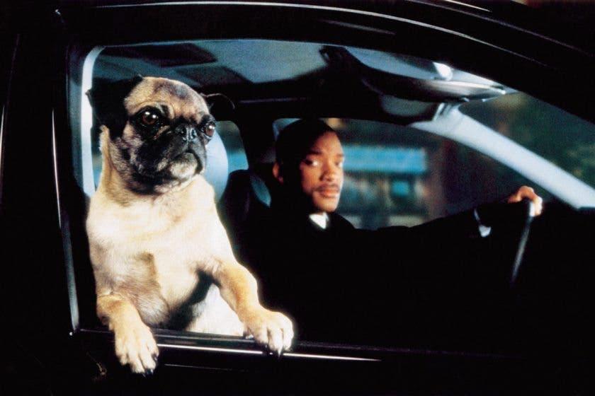 Frank the Pug (M&B)