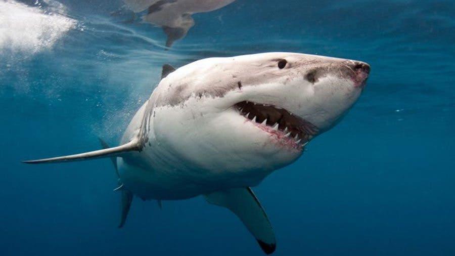 tiburon-Infierno-Azul