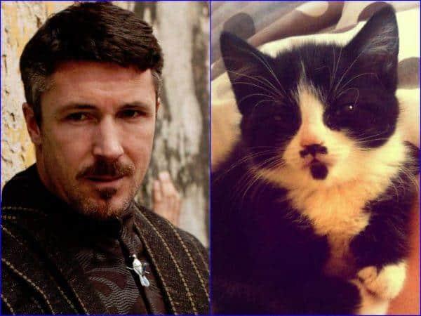 Juego de Tronos vs Gatos