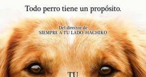 """Poster for the movie """"Tu mejor amigo"""""""
