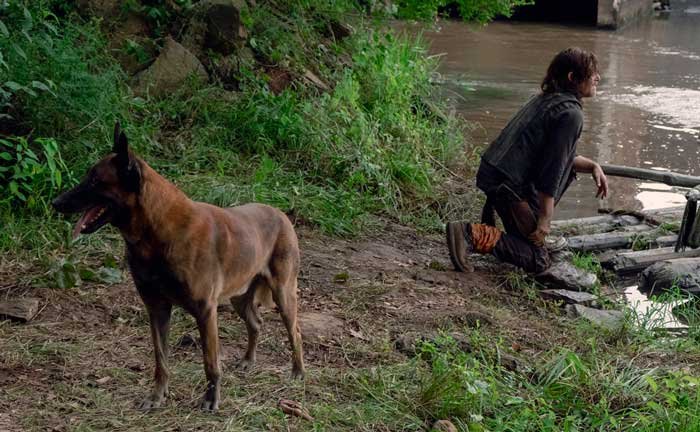 Perro The Walking dead