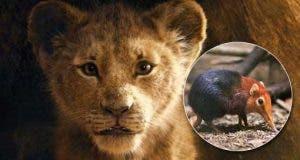 El Rey León tendrá un nuevo y misterioso personaje