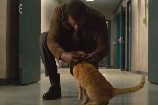 ¿Nick Fury perderá el ojo por culpa del gato de Capitana Marvel?