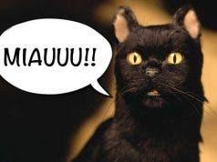 ¿En Sabrina temporada 2 hablará el gato Salem? Tenemos la respuesta