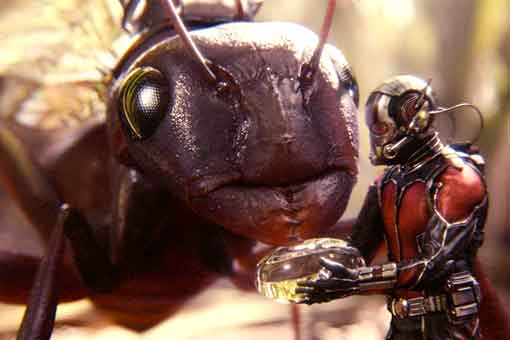 Ant-Man casi usa un ejército de insectos gigantes en Vengadores: Endgame