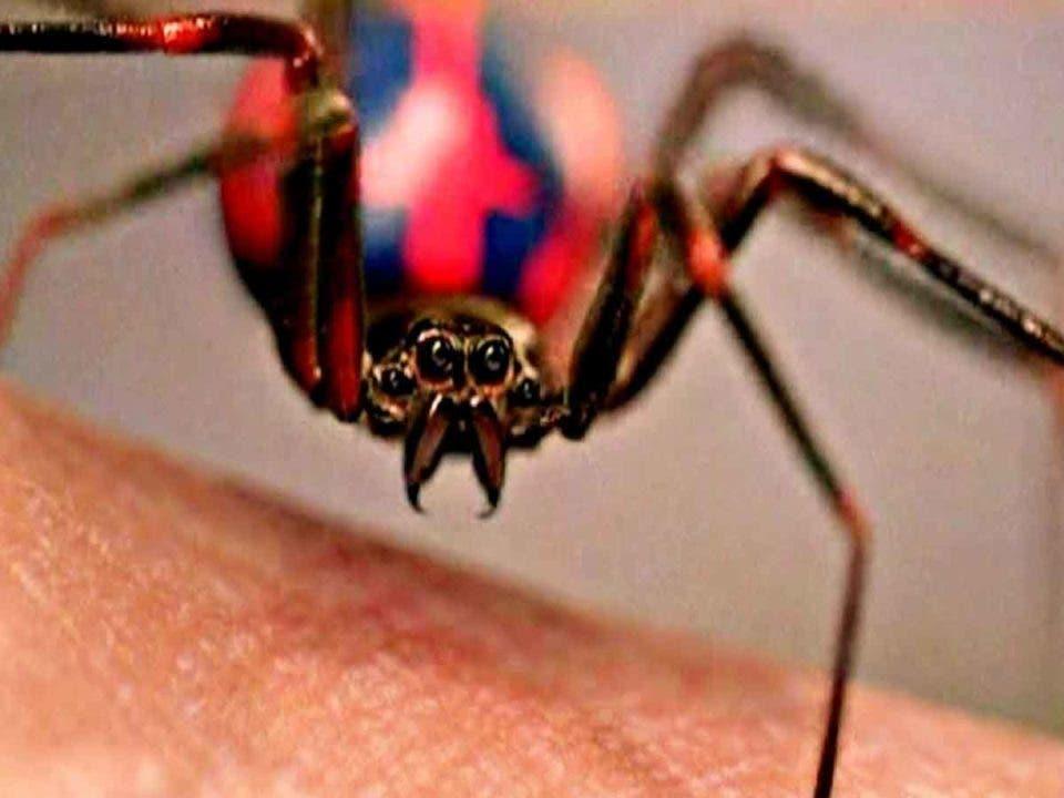 3 niños se dejan picar por una araña para tener los poderes de Spider-Man